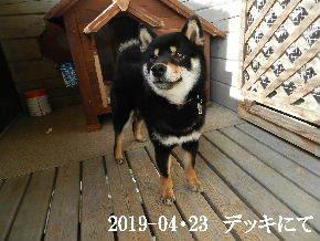 2019-04・23 今日の麻呂 (5).JPG