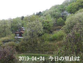 2019-04・24 今日の里山は・・・ (4).JPG