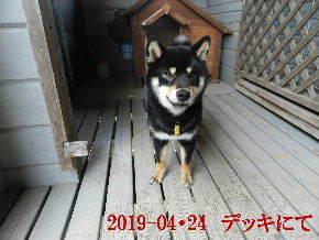 2019-04・24 今日の麻呂 (5).JPG
