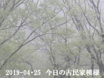 2019-04・25 今日の古民家模様.JPG