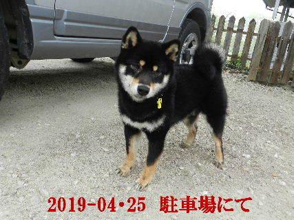 2019-04・25 今日の麻呂 (4).JPG