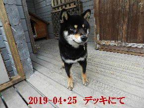 2019-04・25 今日の麻呂 (6).JPG