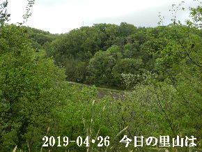 2019-04・26 今日の里山は・・・ (3).JPG
