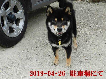 2019-04・26 今日の麻呂 (6).JPG