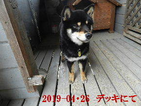 2019-04・26 今日の麻呂 (7).JPG