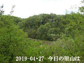 2019-04・27 今日の里山は・・・ (3).JPG