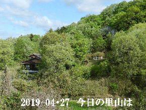 2019-04・27 今日の里山は・・・ (4).JPG