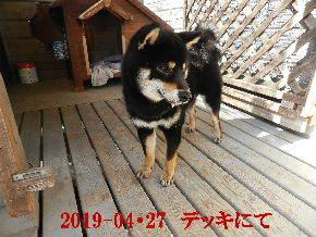 2019-04・27 今日の麻呂 (5).JPG