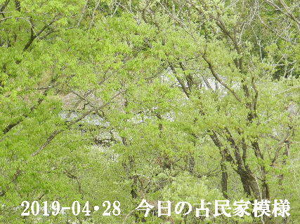 2019-04・28 今日の古民家模様.JPG