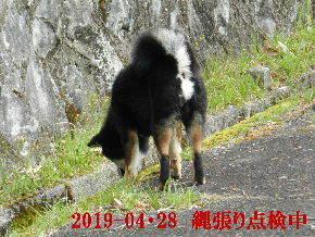 2019-04・28 今日の麻呂 (1).JPG