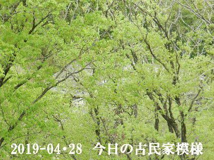 2019-04・29 今日の古民家模様.JPG