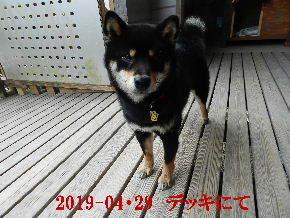 2019-04・29 今日の麻呂 (1).JPG
