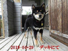 2019-04・29 今日の麻呂 (2).JPG
