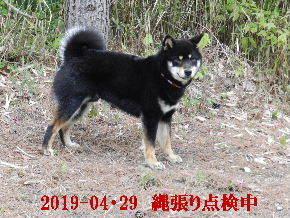 2019-04・29 今日の麻呂 (4).JPG