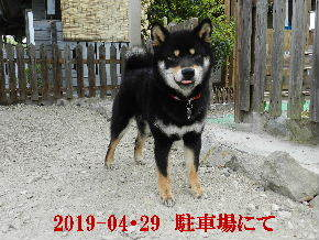 2019-04・29 今日の麻呂 (5).JPG