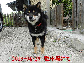 2019-04・29 今日の麻呂 (6).JPG