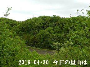 2019-04・30 今日の里山は・・・ (3).JPG