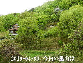 2019-04・30 今日の里山は・・・ (4).JPG