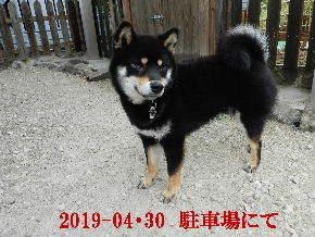 2019-04・30 今日の麻呂 (4).JPG