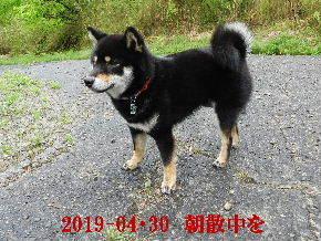 2019-04・30 今日の麻呂 (6).JPG