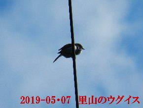 2019-05・07 今日の出遭い・・・ (2).JPG