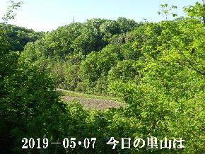 2019-05・07 今日の里山は・・・ (3).JPG