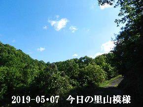 2019-05・07 今日の里山は・・・ (5).JPG