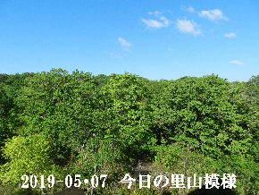 2019-05・07 今日の里山は・・・ (7).JPG