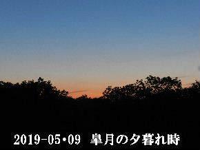 2019-05・09 里山の夕暮れ時 (3).JPG
