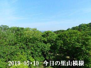 2019-05・10 今日の里山模様・・・ (7).JPG