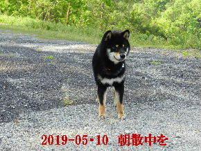 2019-05・10 今日の麻呂 (1).JPG