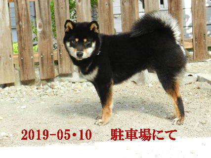 2019-05・10 今日の麻呂 (10).JPG