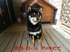 2019-05・10 今日の麻呂 (12).JPG