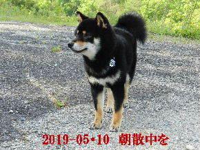 2019-05・10 今日の麻呂 (2).JPG