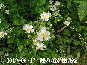 2019-05・17 今日の出遭い・・・ (2).JPG