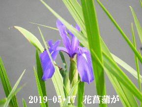 2019-05・17 今日の出遭い・・・ (3).JPG