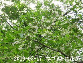 2019-05・17 今日の出遭い・・・ (8).JPG