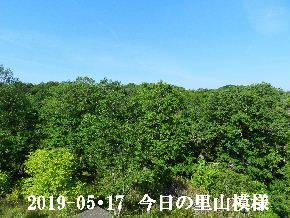 2019-05・17 今日の里山模様・・・ (6).JPG