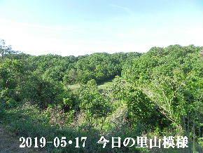 2019-05・17 今日の里山模様・・・ (7).JPG