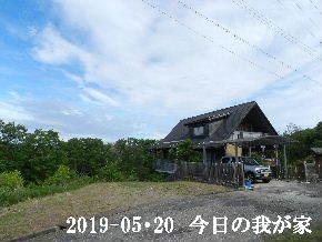 2019-05・20 今日の里山模様・・・ (1).JPG