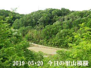 2019-05・20 今日の里山模様・・・ (3).JPG