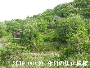 2019-05・20 今日の里山模様・・・ (4).JPG