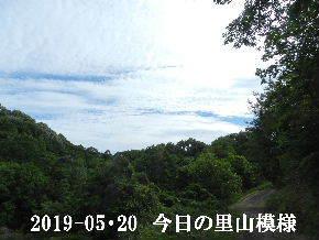 2019-05・20 今日の里山模様・・・ (5).JPG