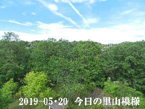 2019-05・20 今日の里山模様・・・ (7).JPG