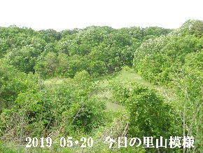 2019-05・20 今日の里山模様・・・ (8).JPG