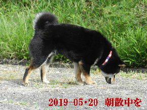 2019-05・20 今日の里山模様・・・の麻呂 (2).JPG
