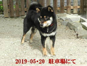 2019-05・20 今日の里山模様・・・の麻呂 (3).JPG