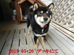 2019-05・20 今日の里山模様・・・の麻呂 (6).JPG