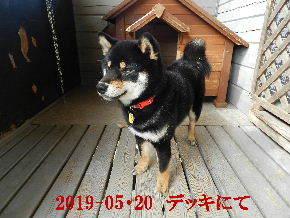 2019-05・20 今日の里山模様・・・の麻呂 (7).JPG
