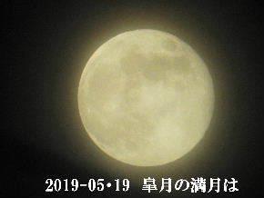 2019-05・20 皐月の満月は・・・ (1).JPG